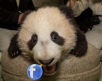 Facebook News Feed Update is like Google Panda