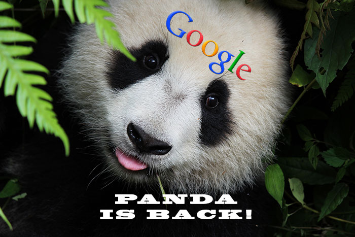 New Google Algorithm Update Is Coming Soon